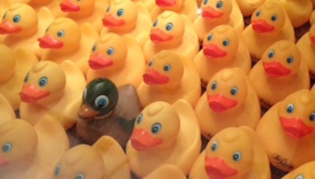 Photo Ducks 2