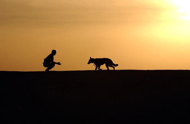 Photo Camino Dog